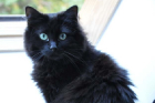 CHAT CHEZ SOI Mulhouse, Cat Sitting - # Pepper