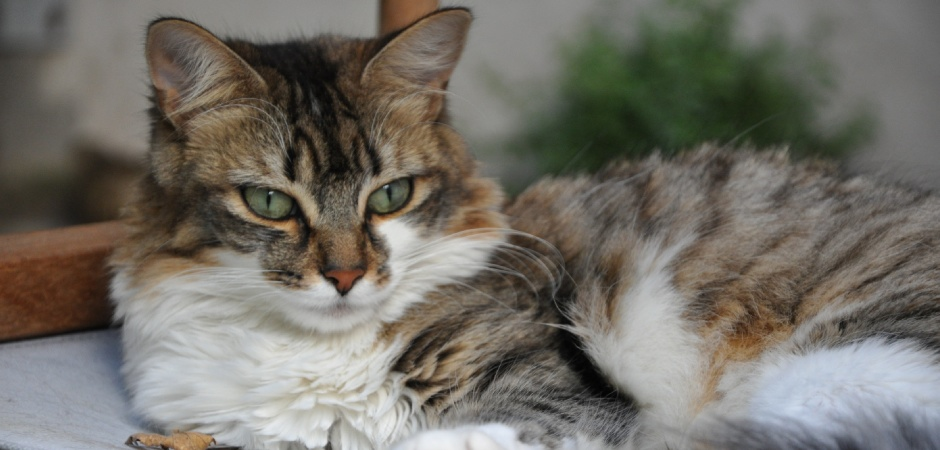 Chat Chez Soi Mulhouse - Chat BETTY BOOP