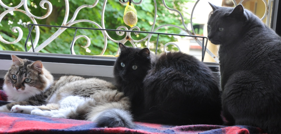 Chat Chez Soi Mulhouse - Chats BETTY BOOP, DOUCE, GARFIELD