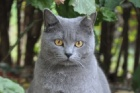 CHAT CHEZ SOI Mulhouse, Cat Sitting - # Melrose